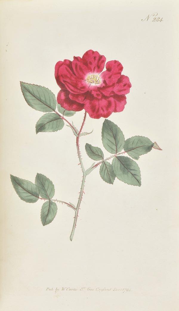 Lot 90 - Curtis (William). The Botanical Magazine or Flower-Garden Displayed, 10 vols. (bound in five),