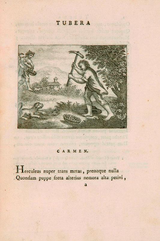 Lotto 384 - Gastronomia Vigo, Giovanni Bernardino. Tubera terrae carmen. Torino, Tipografia Regia, 1776.